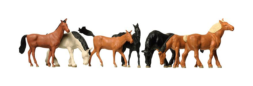 154005 Warm-blooded/cold-blooded horses