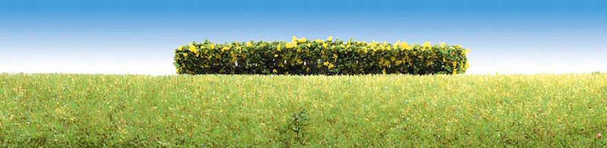 181399 3 hedges, flowering yellow