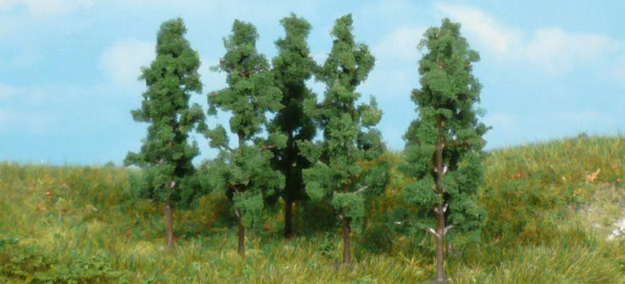 1123 6 black poplar trees