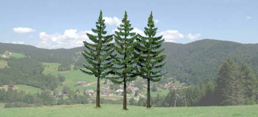 2128 High- trunk Spruce Trees