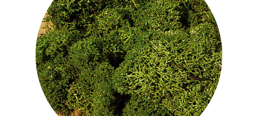 3234 Reindeer moss medium green