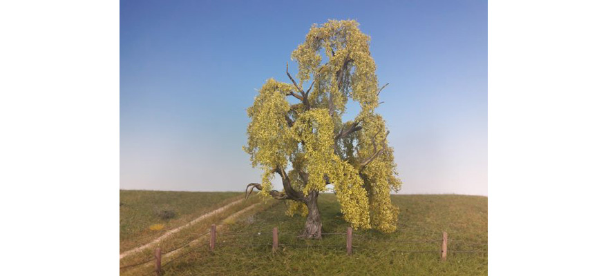 240-21 Weeping willow, spring